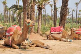 <p>Marrakech</p>